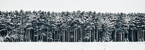 Bäume in Folge ausgerichtet im Winterschnee Lizenzfreie Stockbilder