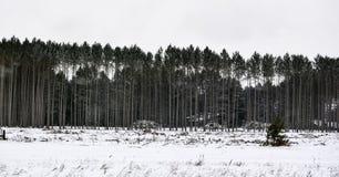 Bäume in Folge ausgerichtet im Winterschnee Stockbild