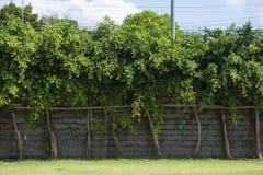 Bäume in Folge vereinbart entlang einer Blockwand Lizenzfreie Stockbilder