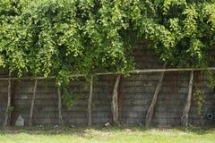 Bäume in Folge vereinbart entlang einer Blockwand Lizenzfreie Stockfotografie