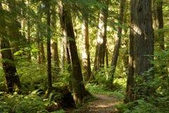 Bäume in forrest Lizenzfreies Stockbild
