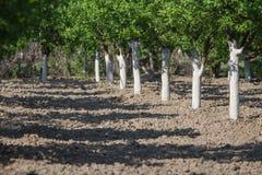 Bäume frisch nachdem dem Weiß werden lizenzfreie stockfotografie