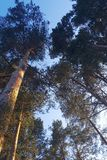 Bäume gegen den Himmel stockbild