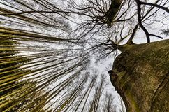 Bäume gegen den Himmel Stockfotografie