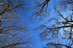 Bäume gegen den Himmel Lizenzfreies Stockbild