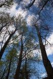 Bäume gegen Himmel Stockbild