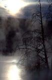 Bäume gegen Nebel und Sonnenaufgang Lizenzfreies Stockfoto