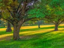 Bäume gelatiert herein Park Stockbilder