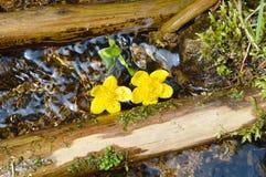 Bäume, gelbe Blumen und Wasser Stockfoto