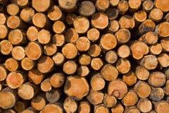 Bäume gestapelt nachdem dem Protokollieren Lizenzfreies Stockbild