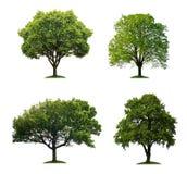 Bäume getrennt Lizenzfreies Stockbild