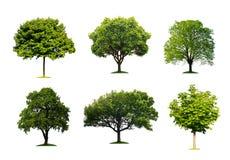 Bäume getrennt stockbilder