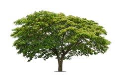 Bäume getrennt auf Weiß lizenzfreie stockbilder