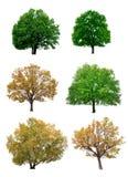 Bäume getrennt auf weißem Hintergrund Stockbild