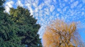 Bäume am Herbsttag lizenzfreies stockbild