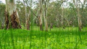 Bäume hinter dem Gras Stockbild