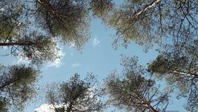 Bäume hoch im blauen Himmel stock video