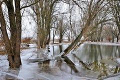 Bäume am Hochwasser Stockfoto