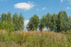 Bäume, hohes Gras und blauer Himmel Stockbild
