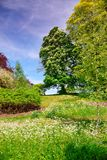 Bäume im Blütenpark nahe Leeds Castle in Kent lizenzfreie stockbilder