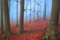 Bäume im blauen Nebel während des Herbstes im Wald Lizenzfreie Stockfotografie
