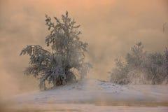 Bäume im eisigen Nebel stockbild