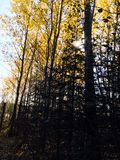 Bäume im Fall stockfotos