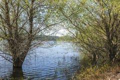 Bäume im Frühjahr, die am Hauser See überschwemmen stockfoto
