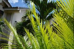 Bäume im Garten Lizenzfreies Stockfoto
