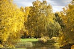 Bäume im goldenen Herbst lizenzfreie stockfotografie