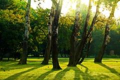 Bäume im grünen Park Lizenzfreies Stockbild