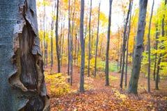 Bäume im hellen Wald Stockfoto
