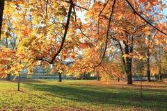 Bäume im Herbst Stockfotografie