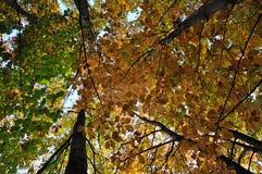 Bäume im Herbst Stockbilder