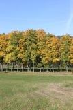 Bäume im Herbst Stockfoto