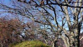 Bäume im Herbst Stockfotos