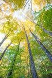 Bäume im Herbst Stockbild