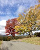 Bäume im Herbst auf Land-Straße Lizenzfreies Stockfoto