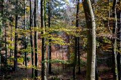 Bäume im Herbstwald Lizenzfreie Stockfotos