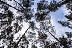 Bäume im Himmel Stockfoto