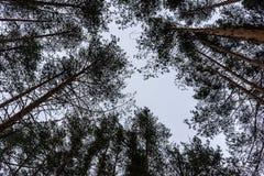 Bäume im Himmel lizenzfreies stockfoto