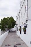 Bäume im Hintergrund eines stree Lizenzfreie Stockfotografie