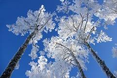 Bäume im Hoarfrost lizenzfreie stockfotografie
