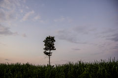 Bäume im Holzschliff Stockfoto