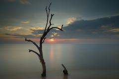 Bäume im Meer Lizenzfreie Stockfotos