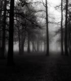 Bäume im Morgen-Nebel Stockbild