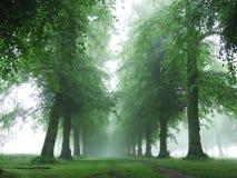 Bäume im Morgennebel Lizenzfreie Stockfotografie
