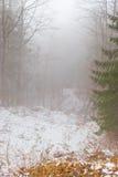 Bäume im Nebel lizenzfreies stockfoto