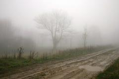 Bäume im Nebel Stockbild