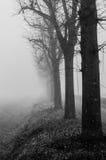 Bäume im Nebel Lizenzfreies Stockbild